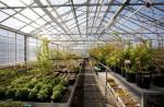 Ботанический сад хельсинкского университета Kumpula