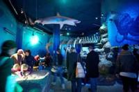Хельсинский океанариум Sea Life расширяется
