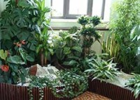 Отель для комнатных цветов в Хельсинки