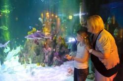 Аквариум Sea Life