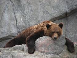 Зоопарк Korkeasaari